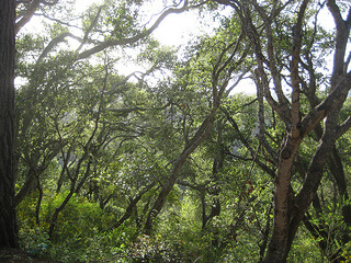 """Santa Cruz Forest View"""