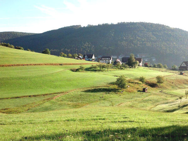 The Black Forest near Baiersbronn, Germany