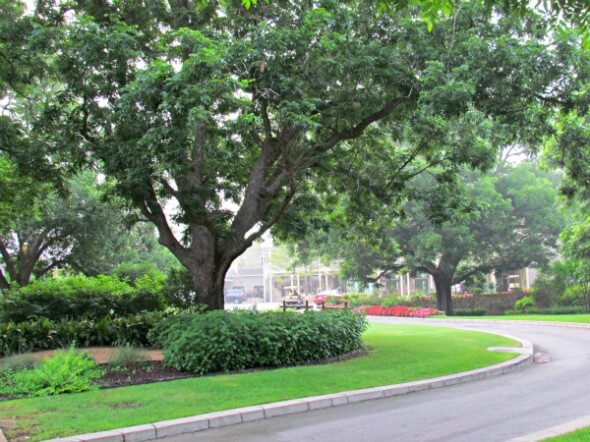 Entry into the Hyatt Lost Pines is overflowing with sprawling oaks, shrubs, flowers and manicured lawns.
