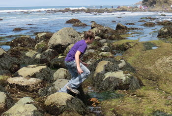 Tidepool at Cabrillo National Monument