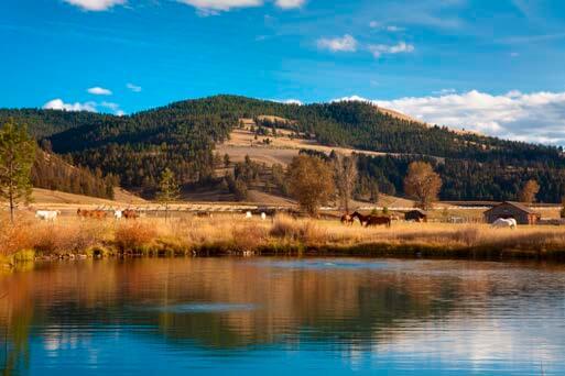 Ranch at Rock Creek, horses