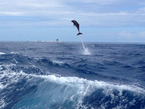 Flying dolphin, Rangiroa, French Polynesia