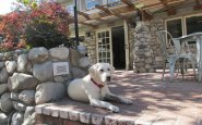 the hideaway, carmel-by-the-sea, labrador retriever, pet-friendly, bed and breakfast