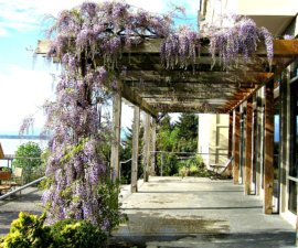 chrysalis-patio