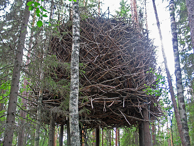 The Bird's Nest at Treehotel, Sweden (Photo by Susan McKee)