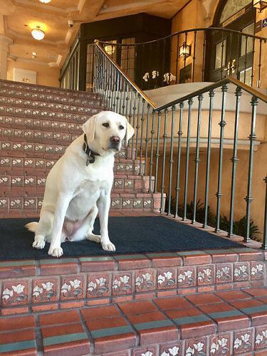 pet-friendly garden court hotel, pet-friendly palo alto hotel, dog-friendly palo alto hotel, palo alto, california