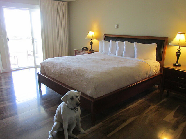 pet-friendly, pacific reef hotel, gold beach, oregon