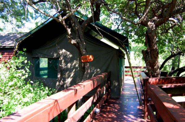 Tents at Kapama Buffalo Camp are on stilts, with wooden walkways connecting them