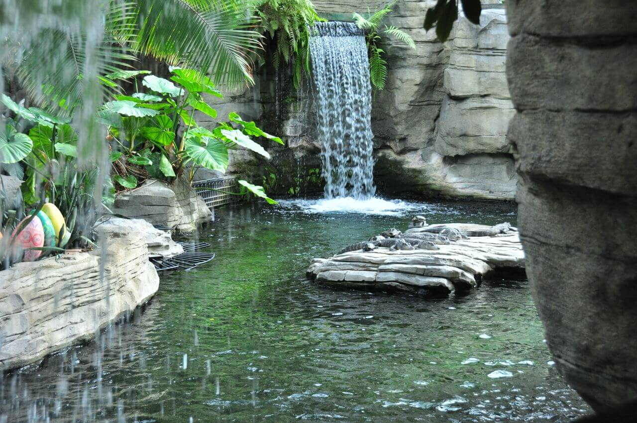 You'll Never Want to Leave the Gaylord Palms in Kissimmee, FL