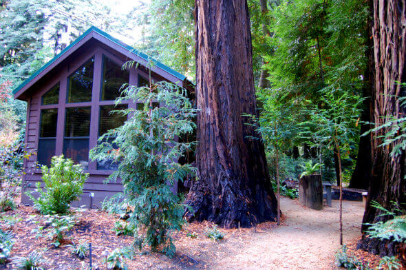 The creekside Sycamore Cabin at Glen Oaks