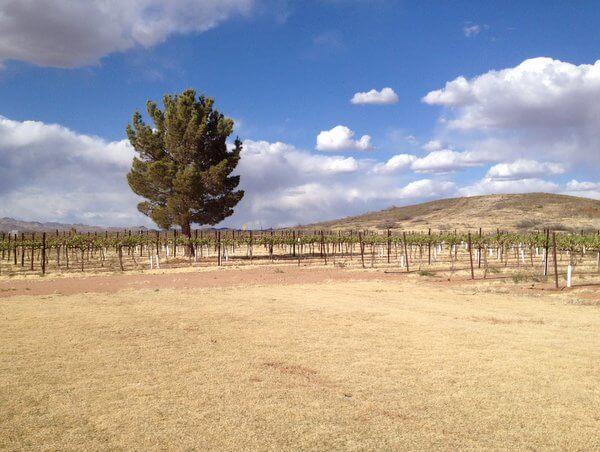 Vineyards, Willcox, Arizona