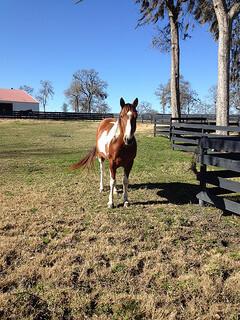 "horse ""Inn at Dos Brisas"""