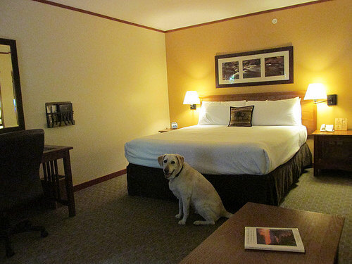 """Skamania Lodge"" hotel room"