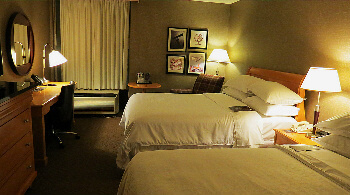 Double bed room on the 6th floor--dog friendly