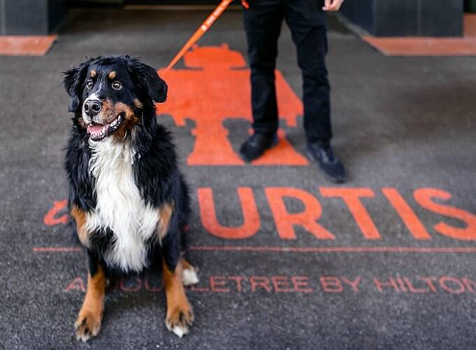 Yes you can bring your four-legged family member to the dog friendly Curtis Hotel Denver.