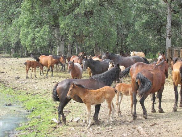 horses, Wild Horse Sanctuary
