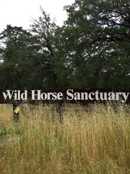 Wild Horse Sanctuary, Shingletown, California