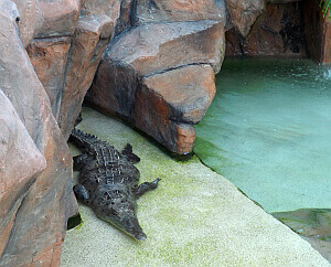 hotel with live crocodiles