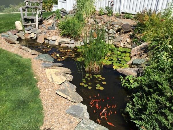 Fish pond, Riverside B&B, Kamloops, BC, Canada