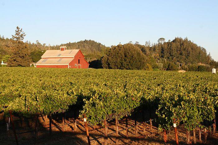 Vineyard views from Geyserville Inn