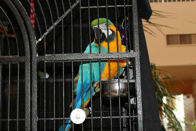 Emmy, the hotel's resident Macaw visits with guests throughout the day.