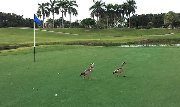 Boca Raton Resort golf