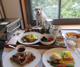 room service, clement hotel palo alto, pet-friendly hotel
