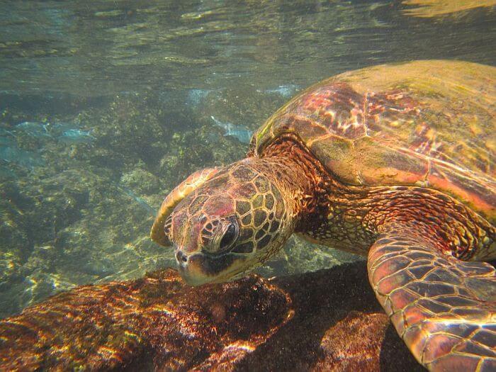 turtle at Black Rock