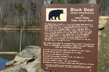 Down by Dewey Lake. Black bears are in these parts, but you probably won't see one.