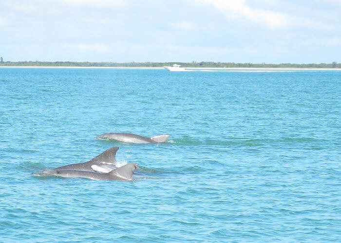 dolphins spotted on sailing excursion, JW Marriott Marco Island