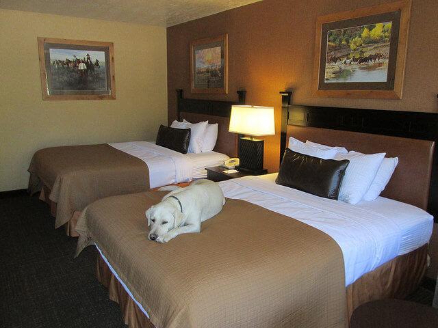 dog-friendly hotel rooms, rubys inn, bryce canyon, utah