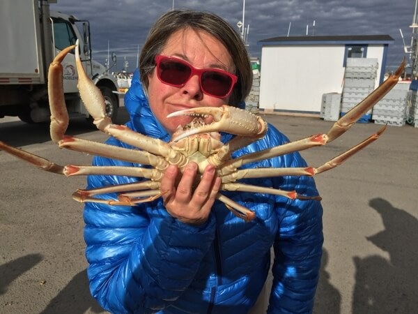 Snow crab, near Auberge La Salicorne, Magdalen Islands, Quebec, Canada