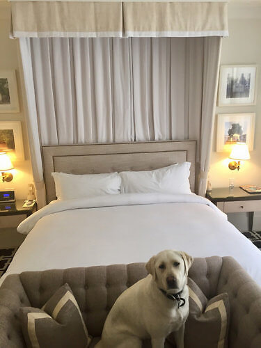 pet-friendly hotel room, king bed, garden court hotel, palo alto, california boutique hotel
