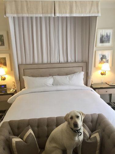 Pet Friendly Hotel Room King Bed Garden Court Palo Alto