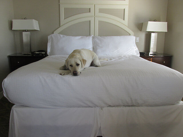 pet-friendly hotel room, sanctuary beach resort, marina, california