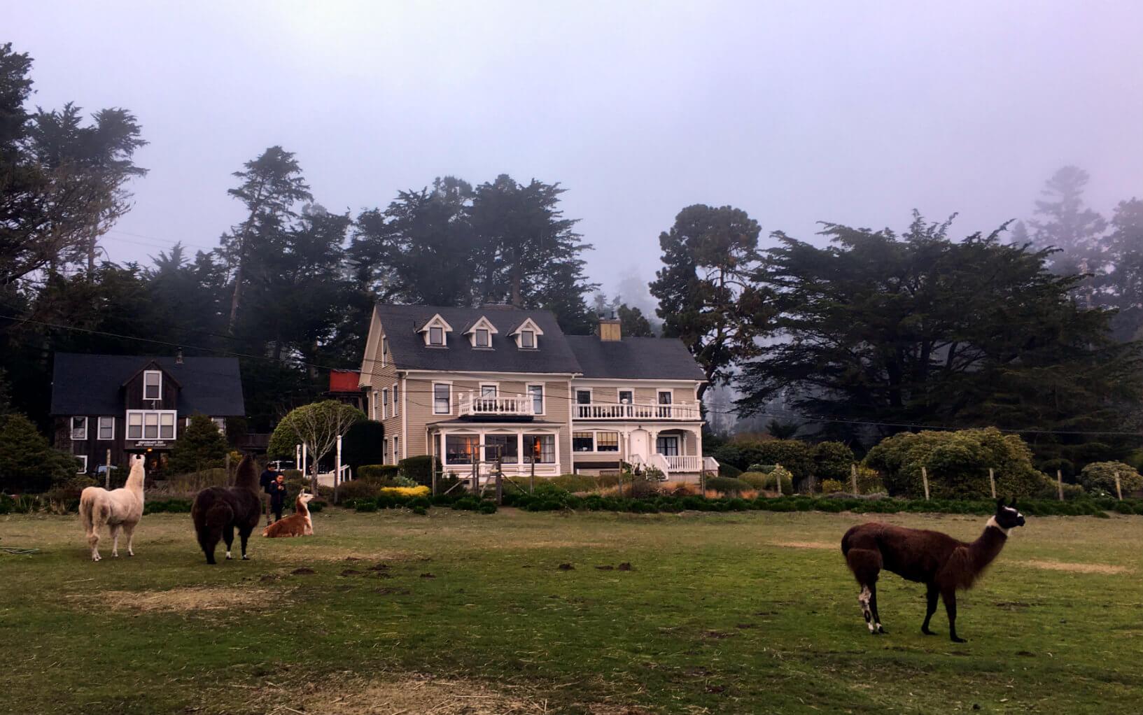 Glendeven Inn and Inn at the Cobbler's Walk in Mendocino, California