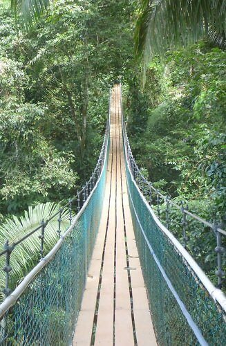 suspension bridge at Bocawina Rainforest Resort in a national park in Belize
