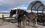wagon ride, best western plus bryce canyon grand hotel