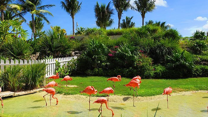 Flamingos Grand Hyatt Baha Mar