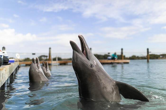 Dolphin experience Hawks Cay Resort