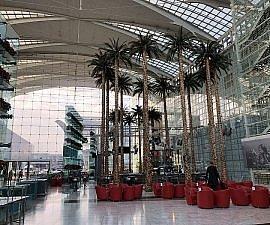 palm trees at Hilton Munich Airport
