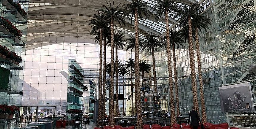 palm trees at Hilton Munich Airport