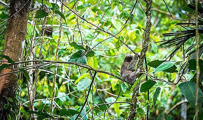 Sloth, Nayara Gardens (Photo courtesy of Nayara Gardens)