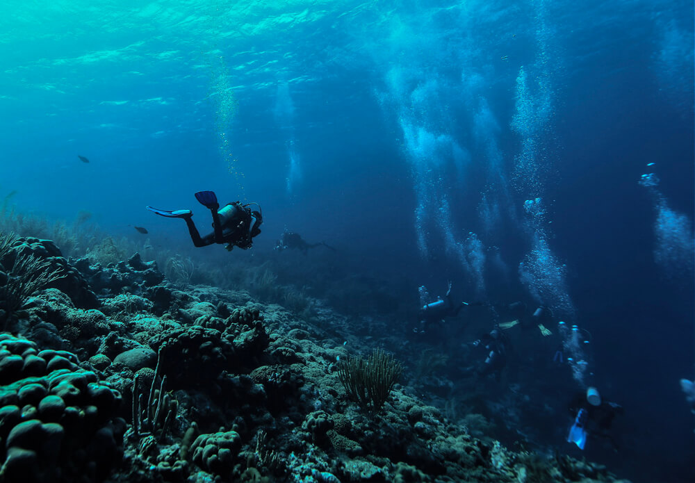 Dive into Bonaire's Hidden Secret: Courtyard Bonaire Dive Resort