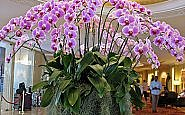 Orchids in lobby of Shangri-La Bangkok (Photo by Susan McKee)