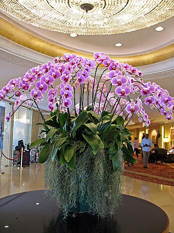 Orchids in lobby of Shangri-La Bangkok (Photo by Susan McKee)