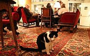 Norman, The Red Lion's cat ambassador
