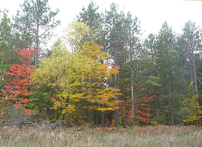 Fall color, Traverse City, Michigan (Photo by Susan McKee)