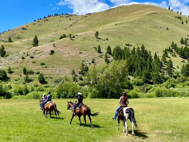 Four horses and riders walk across a lush green pasture to visit some cattle on Rocking Z Guest Ranch.