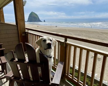 Pet-friendly oceanfront